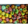 Tomates Anciennes assortiment Gourmand (3.5 kg)